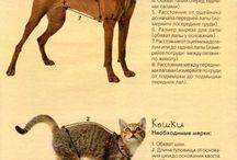 шмотки для животинки