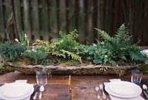 Ferns, moss, and fern moss