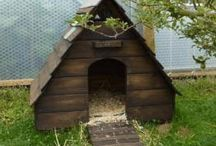 Ducks / Very cute duck house