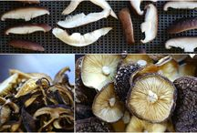Mushrooms / Anything About Mushrooms