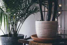 Le Migliori Piante Da Interno Per Persone Impegnate / Che tu sia uno stacanovista, un viaggiatore o un casalingo, abbiamo creato questa bacheca per permetterti di scegliere le piante migliori per arredare la tua casa