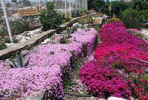 mi lindo jardin