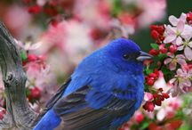 青い鳥の美しい画像
