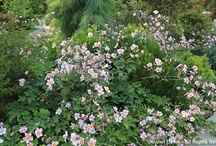 Perennials for August / by Fran Willis