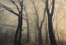 Trees / by Charlotte Sofie Brøns