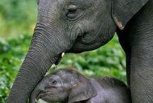 animals. / by molly newborn
