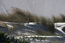 Catching The Wind / by Marsha Chilcoat