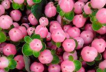 Цветы ягоды зелень