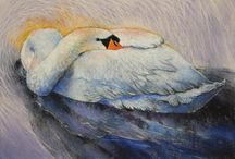 Birds / Drawings from birds made by Loes Botman with pastels.