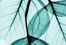 Natura x-ray
