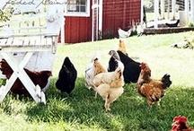 Chickens / by Patricia Gasparino