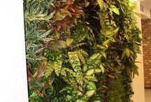 Вертикальные сады / Вертикальное озеленение