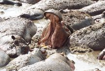 Wildlife in Tanzania / #Wildlife #Animals #Tanzania #Kilwa #Africa #Photography