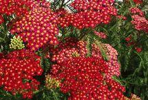 Beautiful flowers:) / by Cort Jenkins