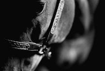 ~Horse~ / Passion *.*