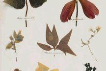 Art: Botanical (Painting/Drawing)
