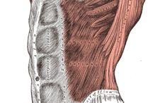 cw / ćwiczenia różnych partii mięśni