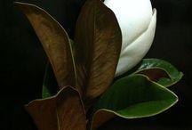 Garden/Plant