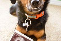 foto para anunciar embarazo