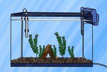Akvarium / akvarium, akvaristika, rybičky...