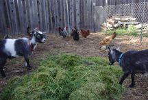 I really want a farm