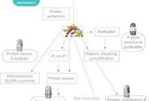 Protein Biology