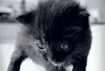 Kittens and other cuties / My friends from the animal world (that I'd like to be pals with).