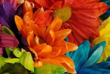 For the Love of Color / The purest and the most thoughtful minds are those that love C O L O U R......!!!!
