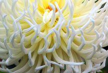 plante de toamna