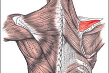 Rehab: Shoulder