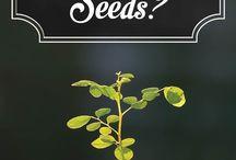 Self Reliance: Gardening / Gardening & Gardening DIY