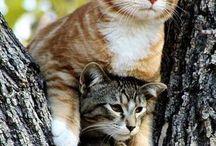 gatos 1