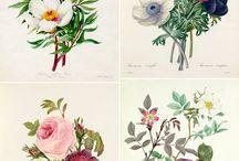 Botanical & Watercolor