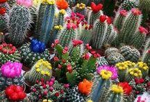 Flore & jardins