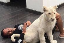 The Black Jaguar-White Tiger Foundation