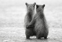 Bearrific / by Inari