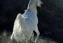 ♡ horses