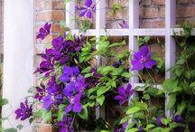 Nápady zahrada / Ideas garden