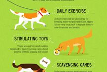 Dogs / This is VERY interesting!