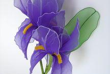 Irisz - Iris