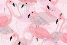 Flamingos Desenho