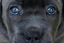el perro bonito