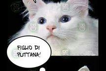 gattissimamente gatto