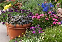 Garten in Blumentöpfen