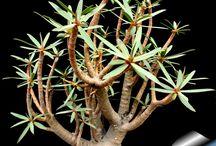 Amazing drought tolerant plants