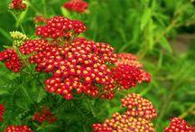 najpiękniejsze rośliny