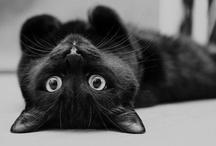 gatos =°^°=