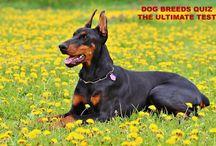 Dog Breeds / Dog Breeds