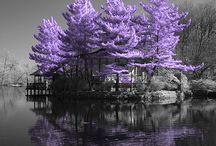 stromy a priroda