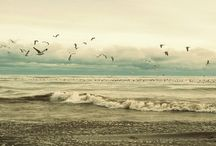 Seaside and Seashells